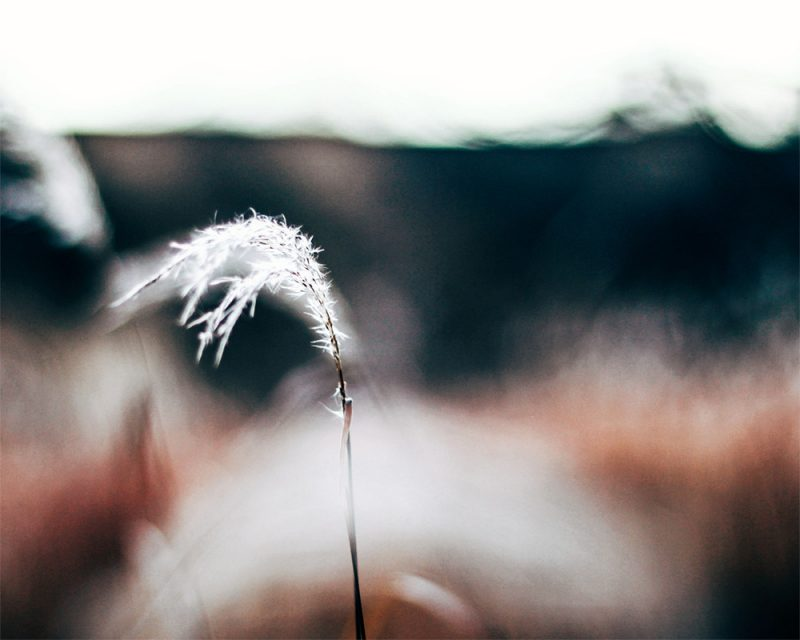 merry steed photography of a weed blowing in the wind called fresh air