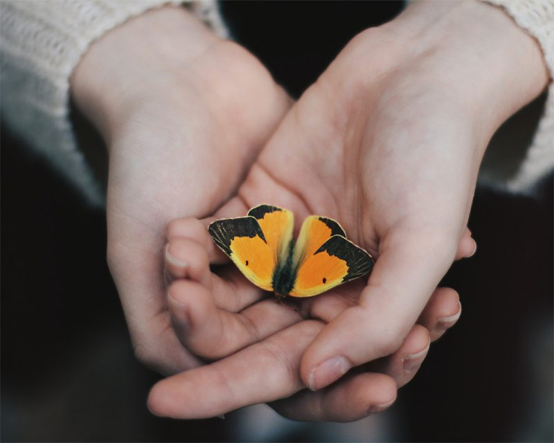 merry steed photography of a girl holding a butterfly called life after death