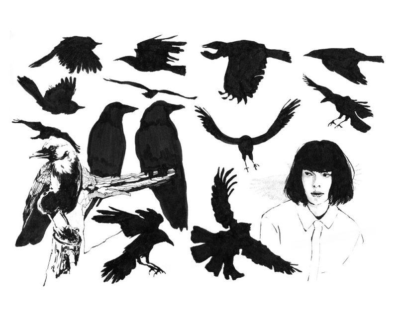 wunderkid lauren suh pen and ink of birds called birds