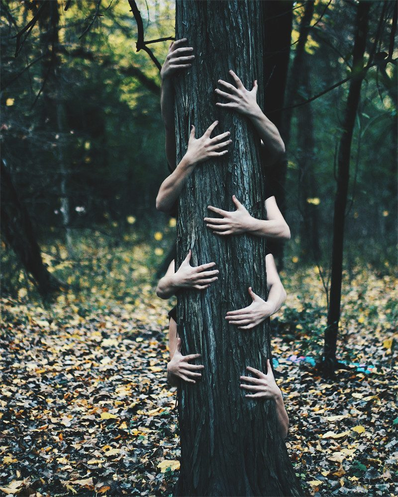 merry steed photography of hands on a tree in the forest called fears