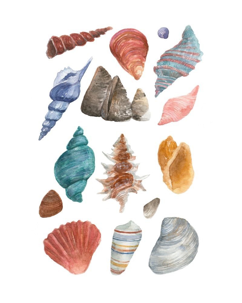 wunderkid lauren suhh watercolor painting of colorful seashells from the beach called seashells by the seashore